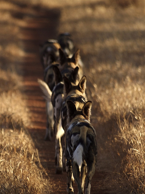 thecatdogblog:  Single file by Wildcaster on Flickr.
