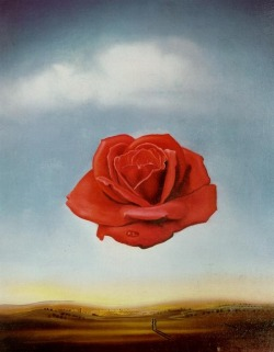 showslow:  Salvador Dalì, Meditative Rose