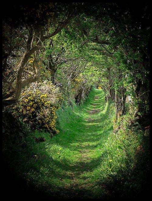 earth-phenomenon:  The stunning tree tunnel in Ballynoe, Northern Ireland