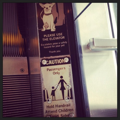 Cause why would you want to take your dog on an escalator to begin with? #richpeopleproblems