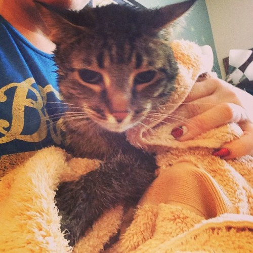 This guy is mortified #erwin #thesmerz #catsofinstagram #bathtime #torturethecatday