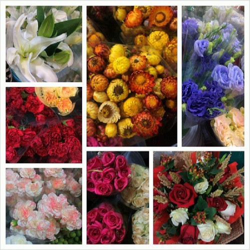 05.15.13: Saint Jo Flowers - Visited my friend's flower shop at Market Market. I shall return with my boyfie aka camera soon. :)