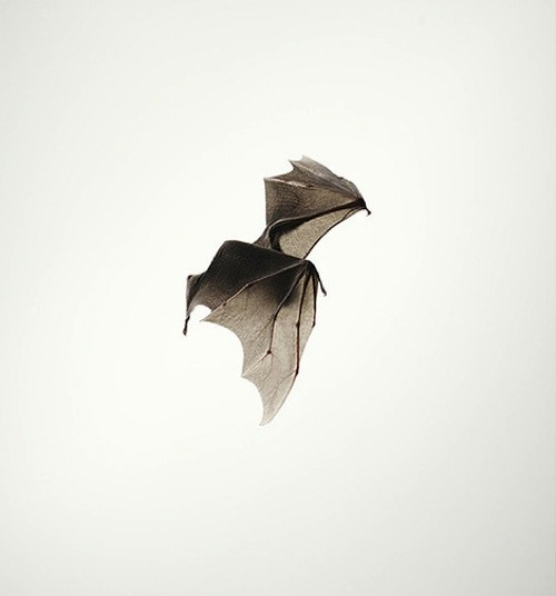 thekhooll:  Bat Bat by Tim Flach.