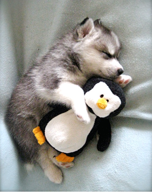 Puppy + Penguin