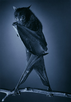 skanansie:  by Tim Flach