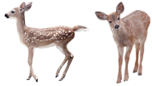 Two words for you deerhearts…transparent fawns.