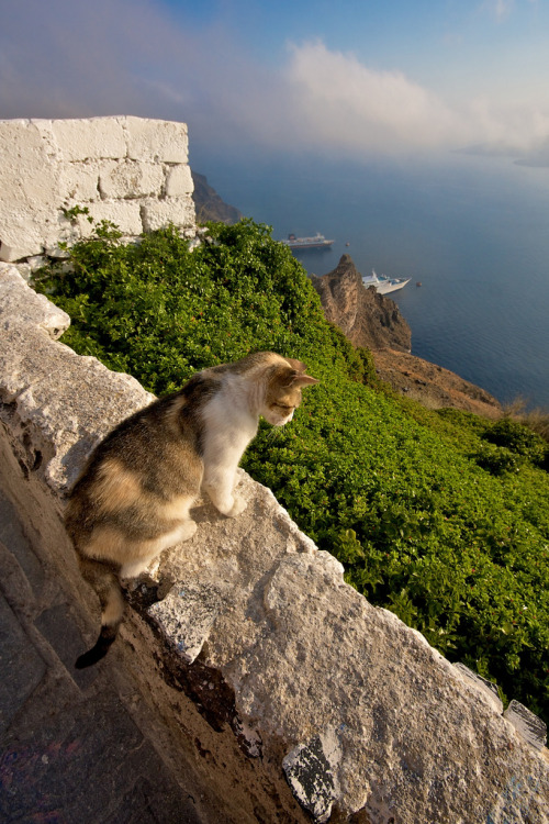 allthingsgreece:  Cat overlooking the caldera (by marylise2008)