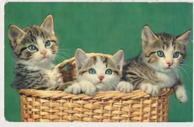 oldtimeycats:  Postcard, 1962. Source: janwillemsen on Flickr.
