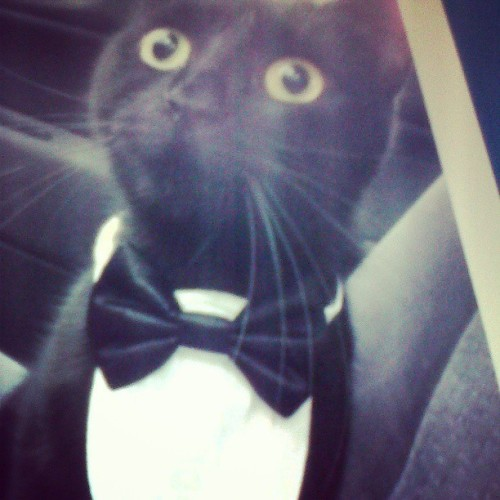 If I ever get married, I want Dewey to wear this c: #adorable #cat #tuxedo