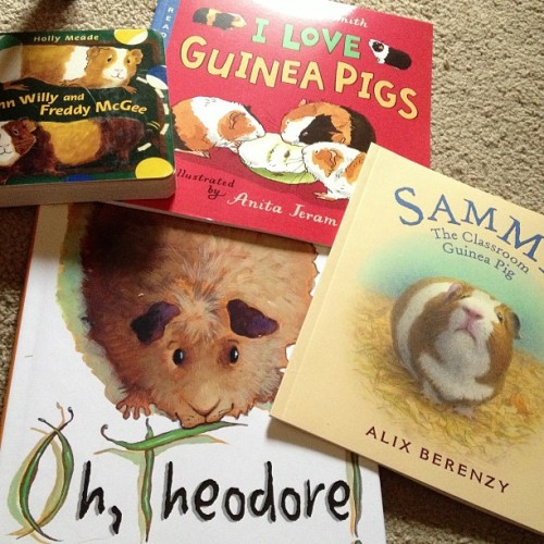 kawohni:  I bought a bunch of children's guinea pig books and they got here today.  <3