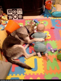 German Shepherd and baby best friends for life. There you go little one, we'll learn this together… so cute For more cute dogs and puppies