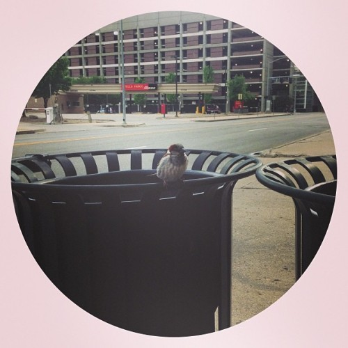 Bird (at Amici Espresso)