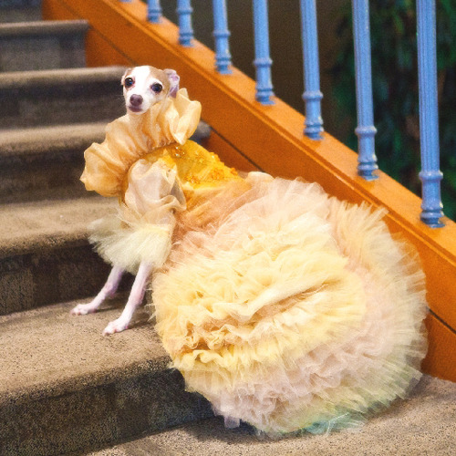 zodiacbaby:  i arrive at the ball in my finest gown. i descend from the stairs like an angel from heaven and strike a pose
