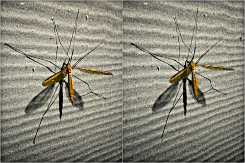 """""""101st Airborne West Nile Defense League"""" (aka 'Skeeter Eaters') A welcome visitor to our front stoop."""