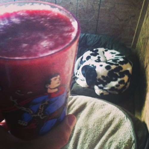 Should I share my #fruit #smoothie with #puppy #apache? #love #dogs #vegan #babe #juice #healthy #lifestyle