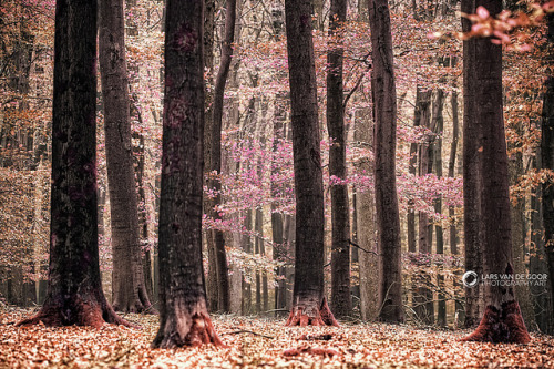 forbiddenforrest:  untitled by larsvandegoor.com on Flickr.