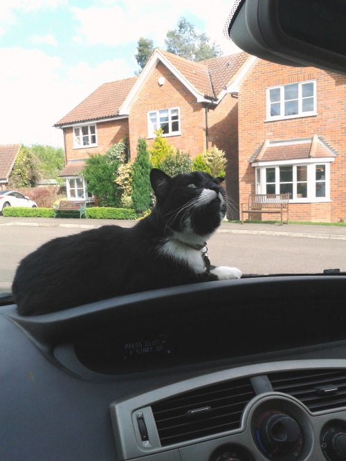 get off of there cat. you would definitely be my last choice for a driving instructor.