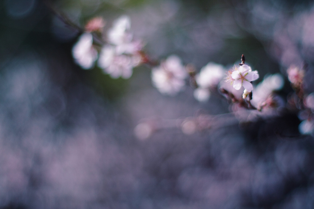 rendermebreathless:  (by *setsuna)