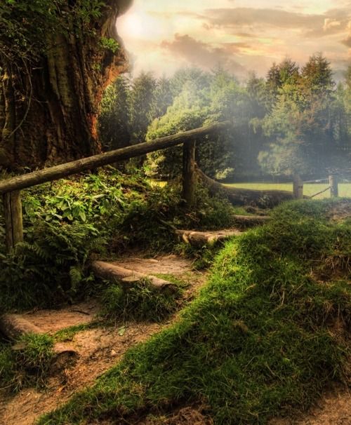 Forest Stairs, via pinterest