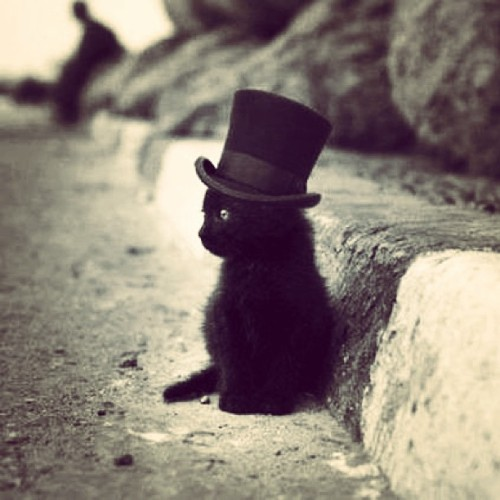 GIVE ME TWELVE OF HIM. #kitten #drugs #tophat #swag #cat