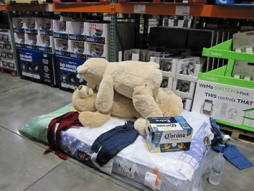 Teddy Bears Had a Good Night at Cosco SPRING BEARK