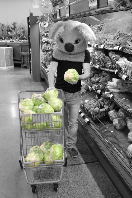Koala grocery shopping
