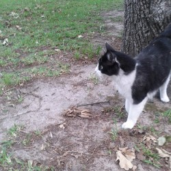 Rebel stalking squirrels. #pussyswag
