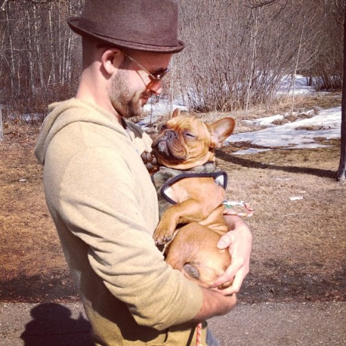 batpigandme:  Somebody got tired on our walk and needed to be carried home. #cute #frenchie #fab_frenchies #lifeanddog #dog #walk by yourdogcharlie http://bit.ly/122uWis