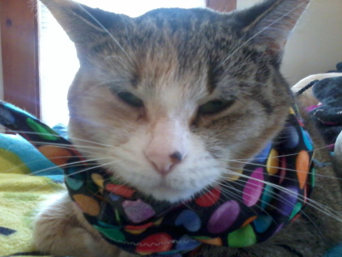 I like torturing  my cat by making her wear fancy but ugly scarves.