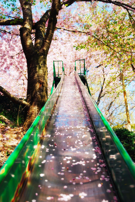 bluepueblo:  Cherry Blossom Slide, Sakura, Japan photo via dominique