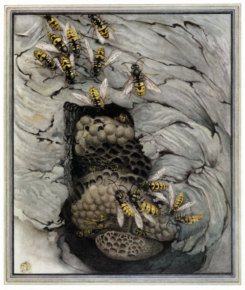 heaveninawildflower:  Wasps (1921) Edward Julius Detmold (1883-1957) from Faber's Book of Insects. http://www.gallery.oldbookart.com/main.php?g2_itemId=12372&g2_imageViewsIndex=1 Wikimedia