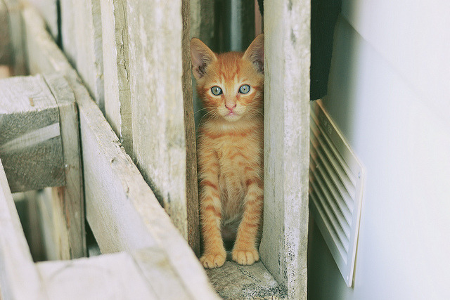 Miao by emanuele.binetti on Flickr.