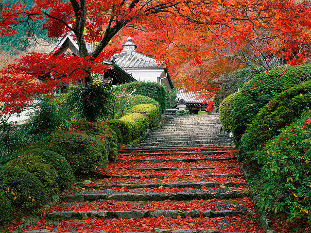 dreams-of-japan:  garden-staircase-kyoto-japan by stchee1223 on Flickr.  One tail