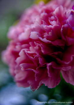 and a pink carnation… http://www.youtube.com/watch?v=gK9VwcsXGTg