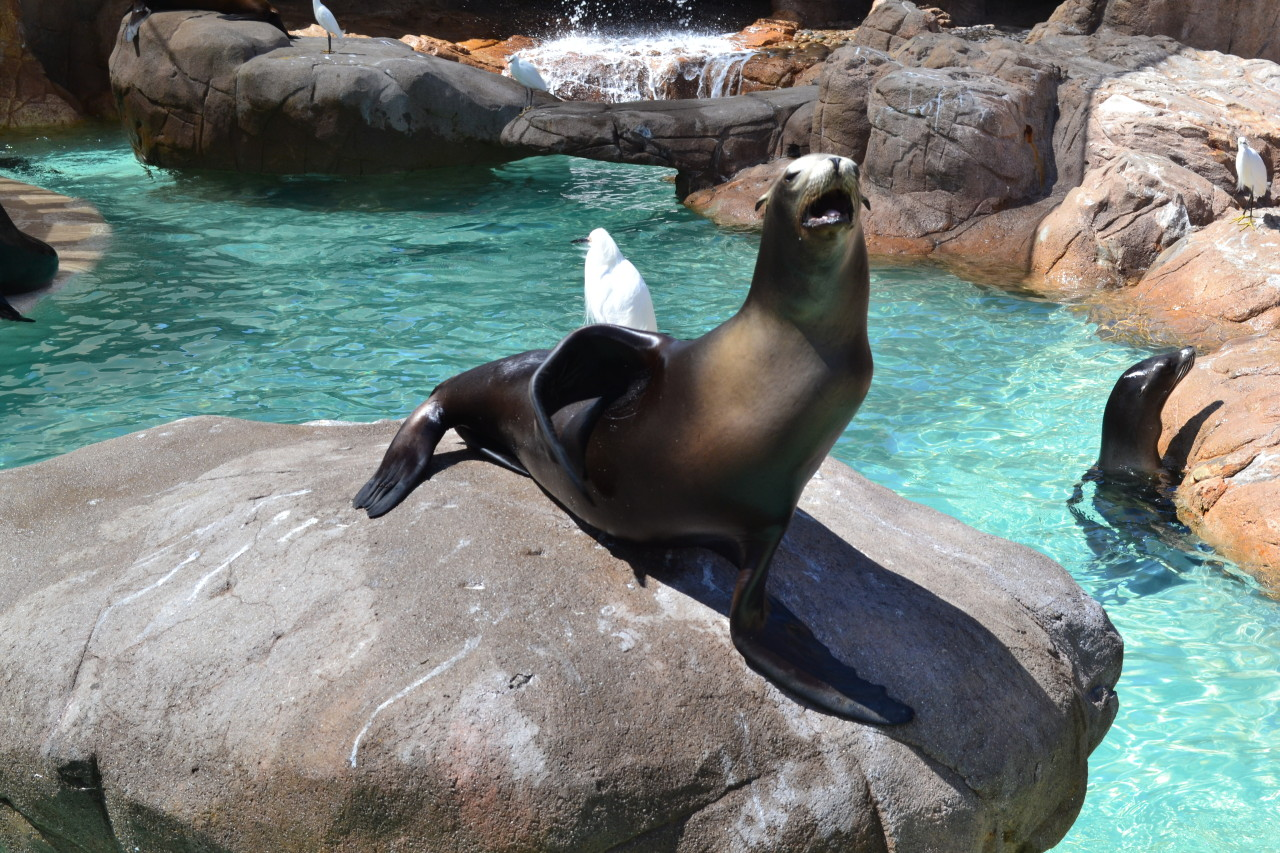 sperminating:  graspinq:  inst4-famous:  at sea worldd (:  um that seal looks like it's in pain  its gettin one up da ass thats all :)