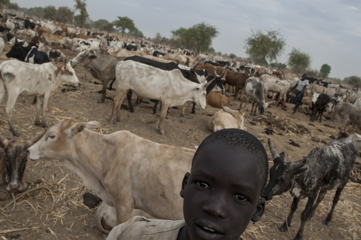 intamunu:  Early morning in a cattle camp in Warrap State, South Sudan. As a pastoralist tribe, the Dinka from Twic county keep cattle of over 200 cows in open camp. Traditionally, children look after and herd them. Cattle are a symbol of wealth and used as a dowry to marry a girl. © Camille Lepage - All rights reserved 2013