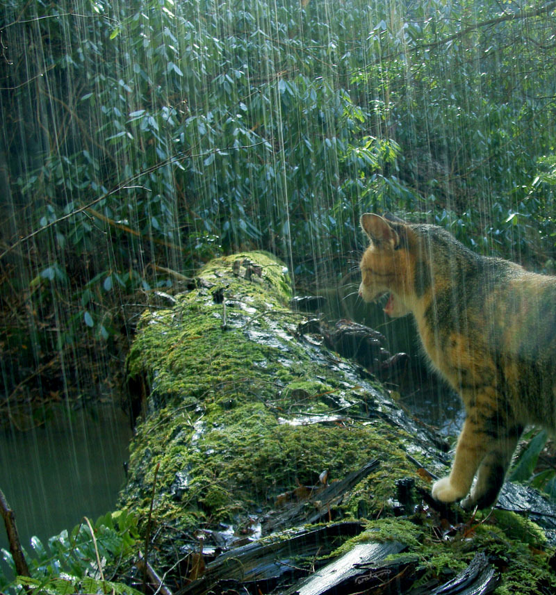 """Rain?! Damn it!"" Photo by ©frolicing in the forest"
