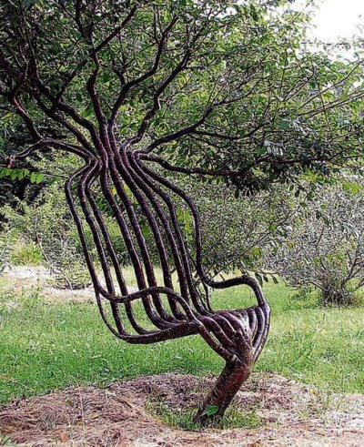 savvyliving:  A Chair From a Living Tree. Australian designers Peter Cook and Becky Northey use the Pooktre method to shape trees into unusual structures such as this chair.