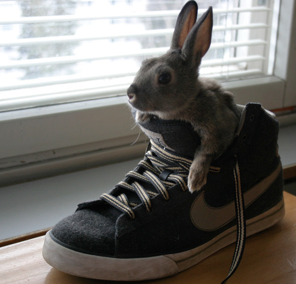 dailybunny:  So You're Telling Me This Shoe Will Make Me Run Faster? Thanks, Tua!