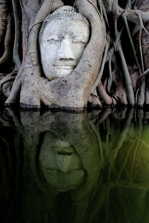 uncommonjones:  Reflection of the Buddha image  by Too Ratana-u-bol Photographer's Note: The flood in Thailand in October 2011 though caused so much trouble to the country but somehow, it has made an amazing reflection on the water at this renowned Wat Mahadhat in Ayuthaya, Thailand