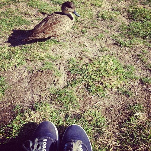 my waddling duck friend  (at Royal Botanic Gardens)