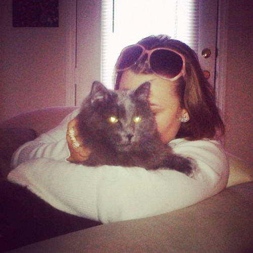 Snuggin' with the Stella bella boo fats <3 #catsofinstagram #prettygirl #love
