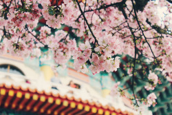 dreams-of-japan:  untitled by Iring Chao on Flickr.