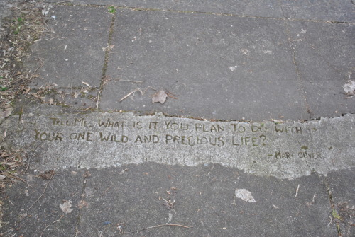 powells:  Portland graffiti — poetry in concrete.