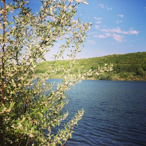 And the air smells of honeysuckle… #thisistherealnewjersey #home #newjersey #secret #lake #quietserenity