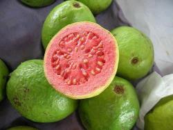 love-laughlife:  Health Benefits of Guava~Guava is a laxative fruit. Being a rich source of dietary fiber, it helps to cure constipation.Magnesium in guavas helps to relax the nerves and muscles in the body.Guavas are low in calories and fats but contain several vital vitamins, minerals, and antioxidant poly-phenolic and flavonoid compounds that play a pivotal role in prevention of cancers, anti-aging, immune-booster,etc.Guava is packed with vitamins and minerals that help to keep the skin healthy, fresh and wrinkle free.Guavas are very good sources of vitamin A, the nutrient best known for preserving and improving eyesight.Guava is rich in Vitamin C which helps to prevent the viral infections like cold and cough. It also effectively helps in treating scurvy.One cup of guava is packed with almost the same potassium as bananas. Potassium works as an important factor in regulating blood pressure by reversing the role of sodium in unbalancing normal blood pressure.Regular guava consumption can also do the skin good through its vitamin E content. Vitamin E helps maintain healthy skin through its antioxidant properties.Guava is a cholesterol free fruit. It satisfies and keeps the stomach free from hunger for a long time. It assists in weight reduction and helps to control diabetes.Guava should be consumed regularly if you want to avoid heart attack.  I miss eating guavas daily, 303 lushlife