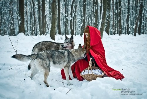 """Little Red Riding Hood"" Miss Bo by Veronika Šantoši Thanks Debbie for Jasper and Zora (Tamaskan Dogs)"