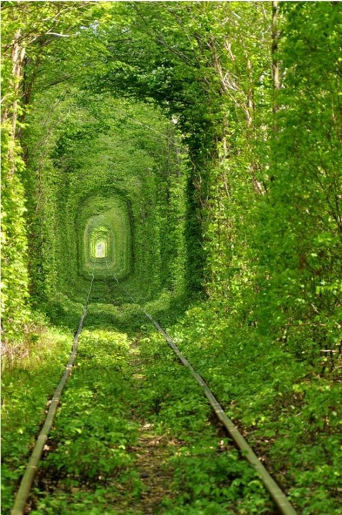 oliviatheelf:  Train Tree Tunnel ( In Urkraine) by Oleg Gordienko