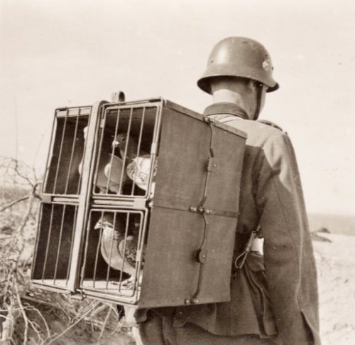 "(via Mobile Communication: WWII | Shorpy Historical Photo Archive)  Found in Giessen, Germany in 1970. On the back is ""Brieftauben werden im Traggestell vorgebracht."" View full size."
