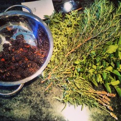 Homegrown herbs from tanja s
